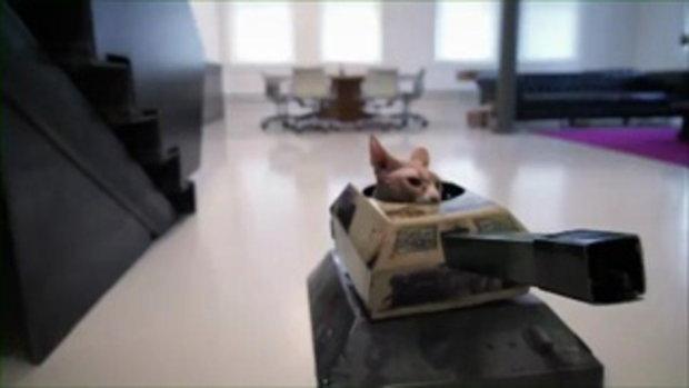 แมวโหด ฆ่าล้างออฟฟิศ