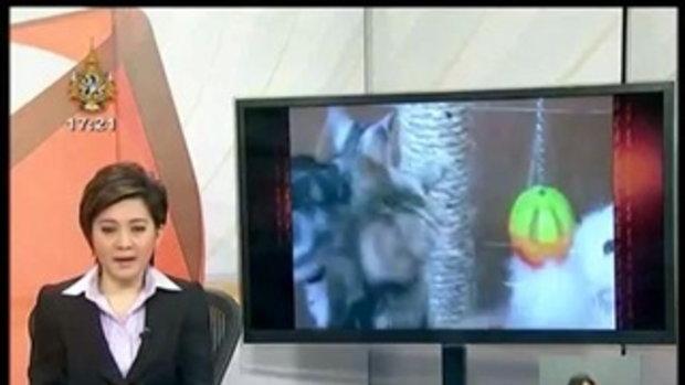 ทันข่าว - ของเล่นน้องแมว