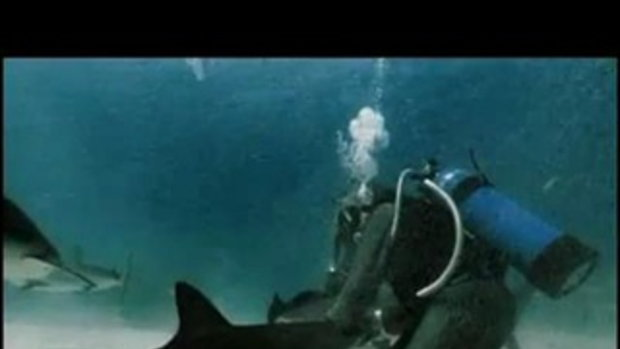 เหลือเชื่อ! จับฉลามตั้งฉาก ทำได้ไงอะ