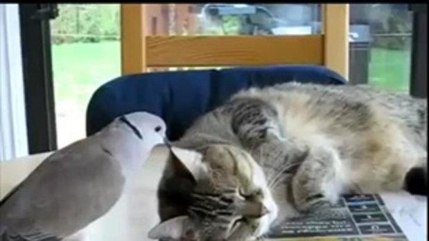 โอย.. แมวจะนอน นกอย่ายุ่ง
