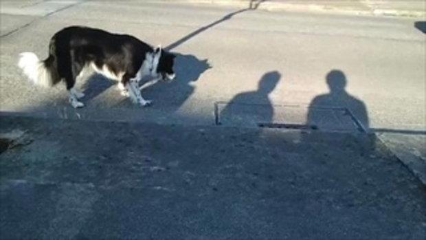 หมา กับ เงา ฮาๆ