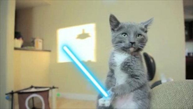 เจ้าแมวน้อย Star war 1