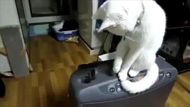 คนเปิด แมวปิด