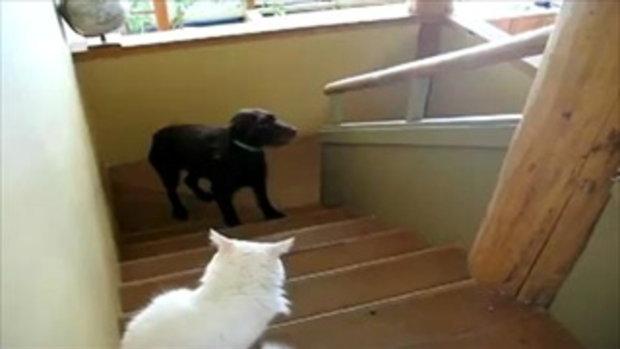 สุนัขขี้ขลาด ไม่กล้าเดินผ่านน้องแมว