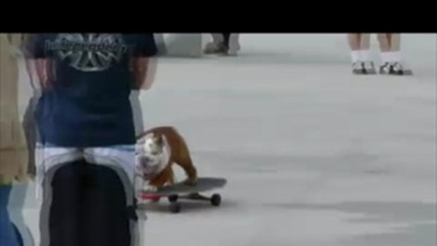 เจ้าหมาแสนรู้เล่นสเก็ตบอร์ด