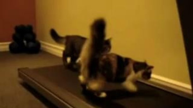 10 สุดยอดคลิปน้องแมว น่ารักอ่ะ