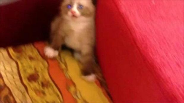 ลูกแมวขี้กลัว ยืนสองขาตาแป๋วเลย