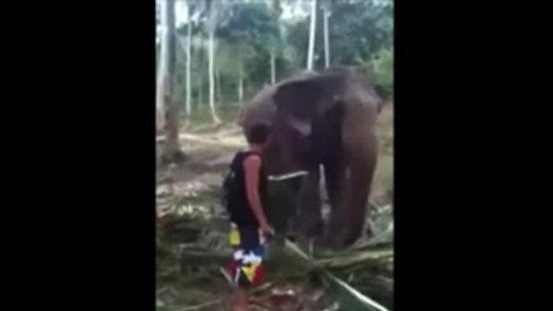 อย่าหือกะช้าง เดี๋ยวโดนช้างโบก
