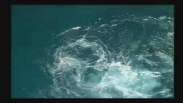 คลิปวาฬเพชฌฆาต ลากครูฝึกจมใต้น้ำ