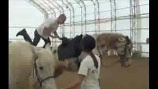 หายซ่า กระโดดขึ้นหลังม้าเจอม้าดีดกระเด็น