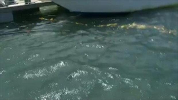 มีทั้งคน Vs ปลาฉลาม VS จระเข้ ในคลิปเดียวกันเลยแฮะ