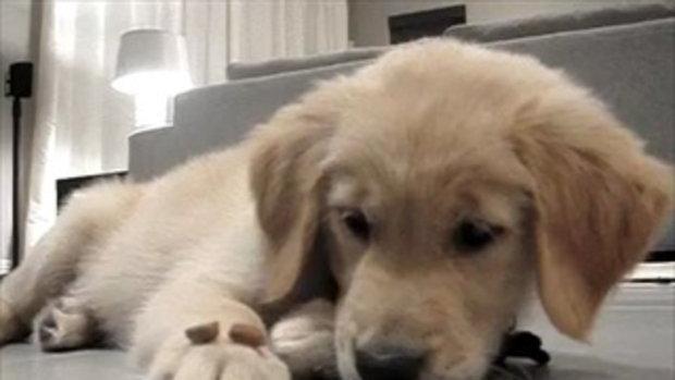 ฝึกการ อดกลั้นใจของน้องหมา น่ารักสุดๆ