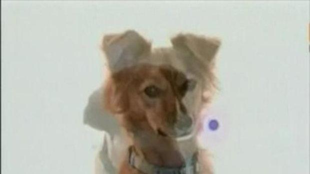 เคเบิ้ลทีวีสุดล้ำ! จัดช่องDog TV เพื่อน้องหมาโดยเฉพาะ