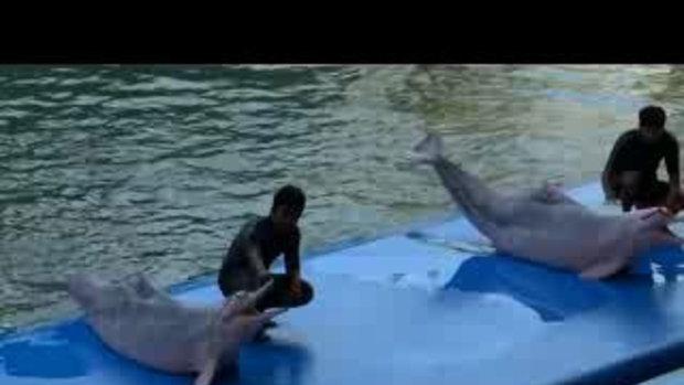 เทื่ยว Pattaya Dolphin World