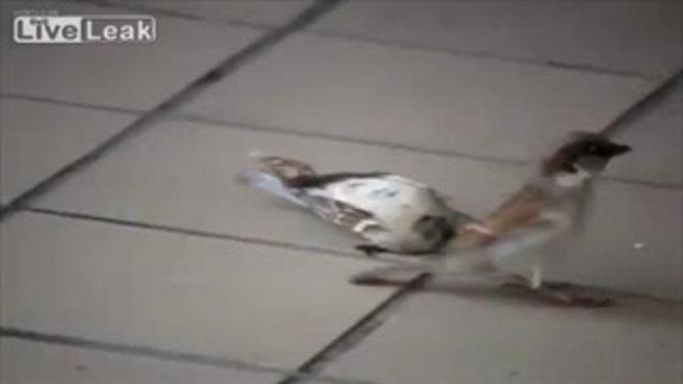 เศร้า! นกพยายาม ช่วยเพื่อนของมัน ที่ตายไปแล้ว