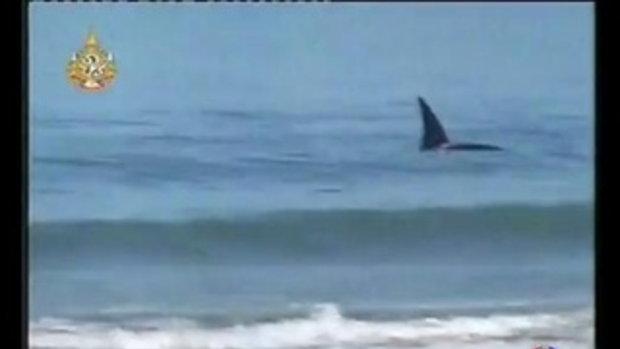 ฉลาม หนี ปลาวาฬ เจอ หมา