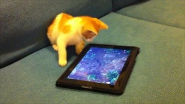 Kitten plays with an iPad   by sia.co.th