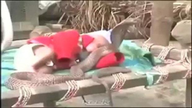 ตะลึง! งูเห่า 4 ตัวช่วยกันเฝ้าเลี้ยงเด็กทารก