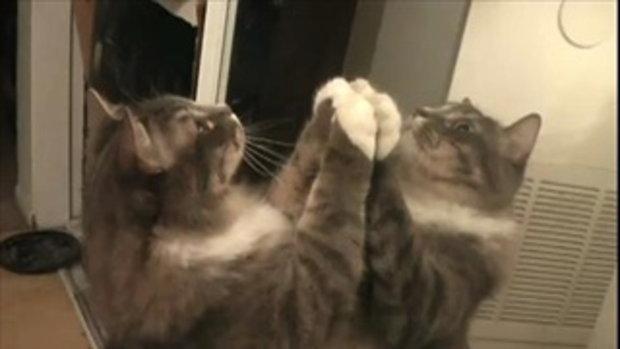 แมว + กระจก อะไรจะเกิดขึ้น