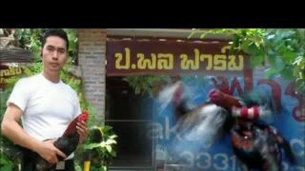 เปิดประตูซุ้มสู่ศิลปะการต่อสู้ไก่ชนไทย