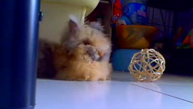 กระต่ายของเรา