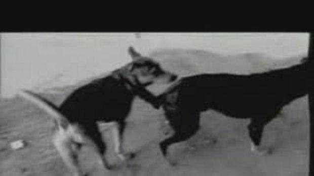 MV เพลง บุษบา โมเดิร์นด็อก