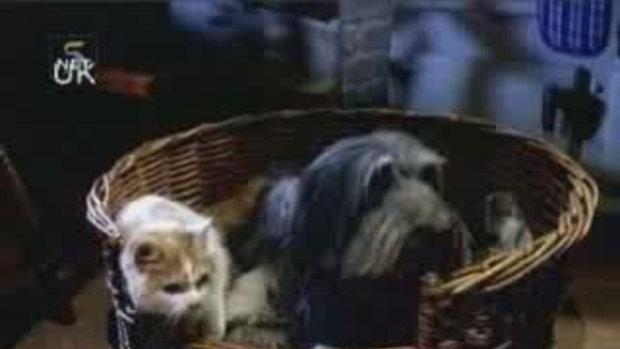 หมาเเมวเเสนรู้จอมวางแผน