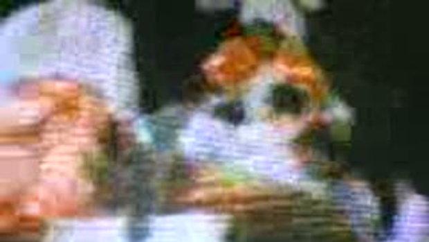 การเชิดสิงโตคณะศิษย์เจ้าแม่ทับทิม สนใจติดต่องานได้
