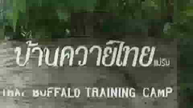 Thai Buffalo Training Camp Mae Rim Chiang Mai