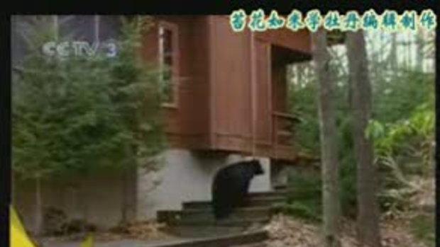ลูกหมีโดนไฟช็อต