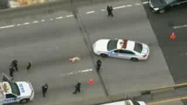 ลูกหมาป้องแม่ถูกรถชนกลางทางด่วน