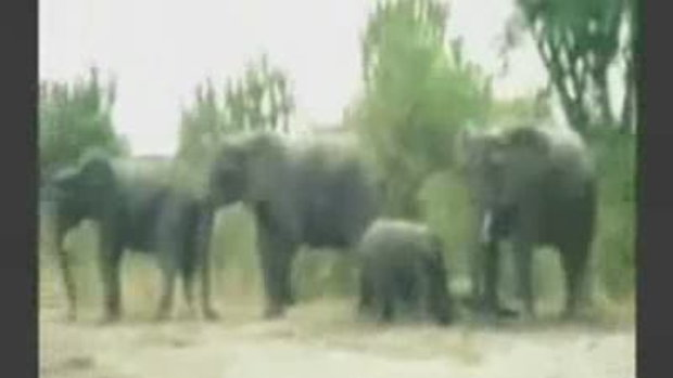 ช้างเบรคแตกหงายเงิบ