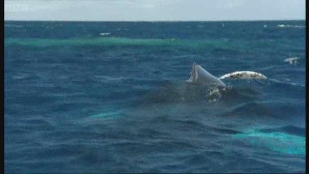 ว่ายน้ำกับวาฬ