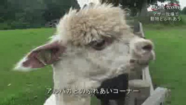 พาเที่ยว ฟาร์มสัตว์ต่างแดนที่ญี่ปุ่น