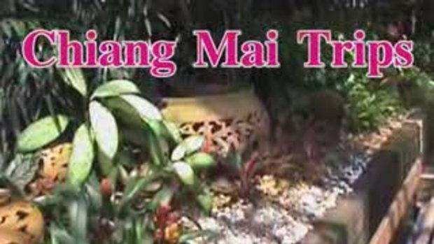Travel Thailand Chiangmai-www.travelthailandtv.com