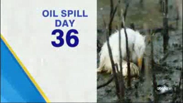 36วันผลกระทบจาก น้ำมันรั่ว อ่าวเม็กซิโก