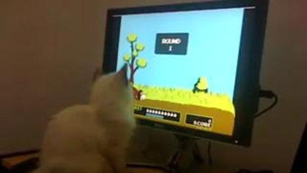 แมวเล่นเกมส์ยิงเป็ด!!