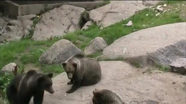 น้องหมีเต้นโยคะ!!