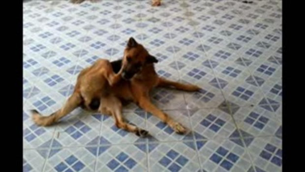 my 2 dog