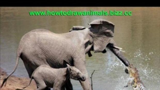 แม่ช้าง vs จระเข้ !!!