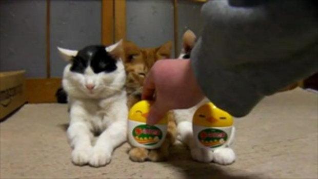 น้องแมว น่ารัก ที่มักโดนใครต่อใครแกล้ง