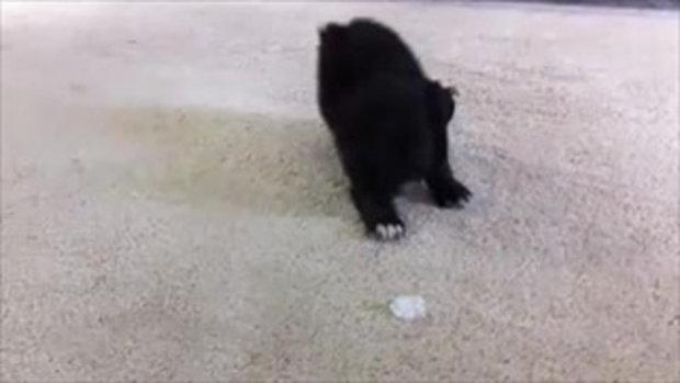 ลูกสุนัข VS ก้อนน้ำแข็ง