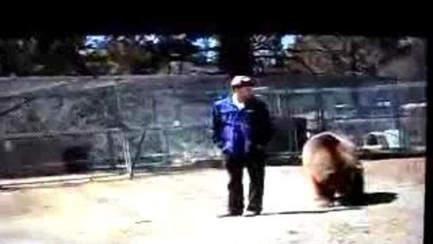 สุดสยอง! ฝึกหมี แต่โดนหมีกัดหัว