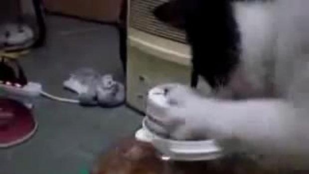 เมื่อน้องแมว หิวมาก!!