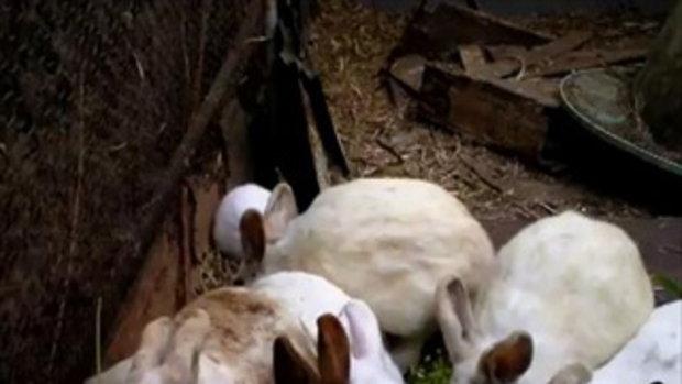 กระต่ายไม่มีหู
