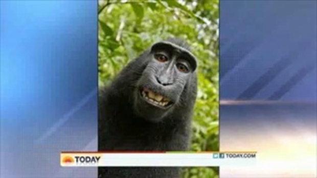 ลิงกังอินโด ฉกกล้อง ไปถ่ายรูปตัวเอง ยิ้มแฉ่ง