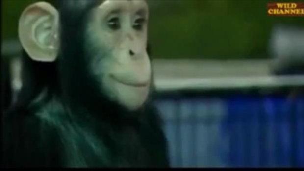 ลิงป้อนนมลูกเสือ ดังไปทั่วโลก