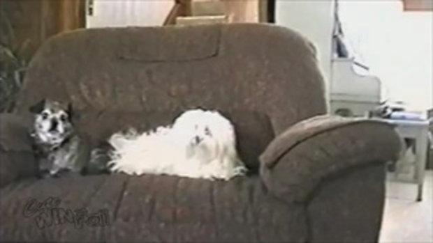 เมื่อน้องหมามีไฟฟ้าสถิต