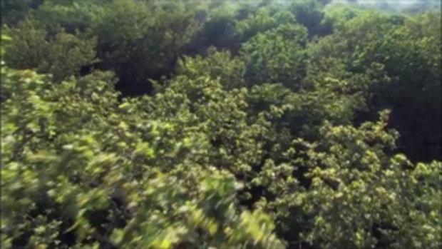 ป่าแสนสวย ช่วยกันอย่าให้มันหมดไป
