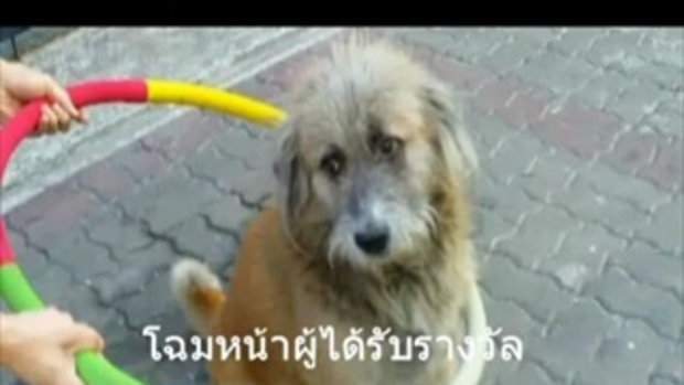 น้องหมาเล่นฮูล่าฮูป